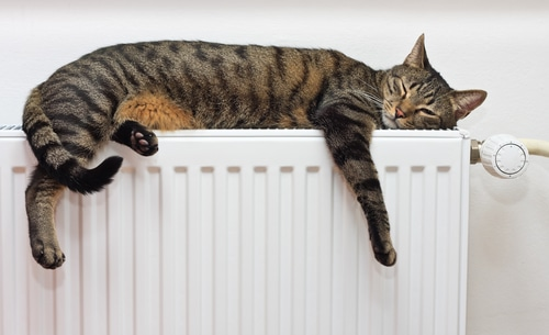 A cat keeping warm on top of a radiator - renewable heating from Greenscape Energy